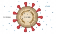 科兴公布新冠疫苗预防效果,人群保护力为78%