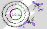 分析:全基因组测序项目发表文章档次的三个影响因素
