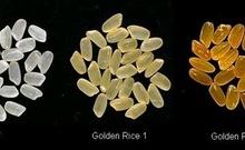 解密中美转基因食品人体试验