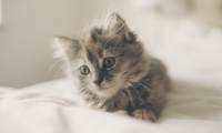 """Allergy:愉快吸猫不是梦,铲屎官过敏的""""元凶""""找到了"""