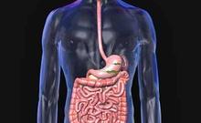 细菌重编程细胞机制:让胃细胞转分化肠细胞