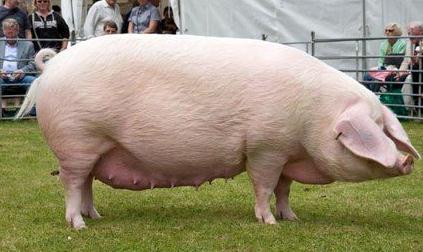 卡梅伦日猪是真的吗_这一协议是在英国首相卡梅伦访华期间达成的