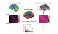 PNAS:人类认知能力在青少年时期迅速发展,大脑的结构-功能耦合扮演着重要角色!