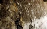 免疫系统大起底:我们每天吸入100亿个霉菌孢子,为什么我们却还活着?