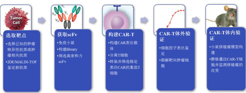嵌合抗原受体T细胞构建服务