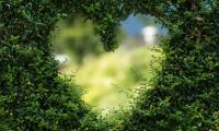 Nature Medicine:中国科学家研发出可改善心脏功能和组织修复的心脏外膜装置
