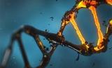 """泼冷水!Nature子刊""""大发现"""":CRISPR可引发数百种""""意外突变""""!"""