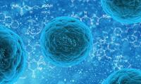 "Science:""监听""细菌对话,体细胞与细菌""军备竞赛""的又一进化策略"