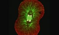 速览 | 改写教科书?中美科学家联合研究发现:受精卵或非生命的起源