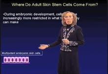 Elaine Fuchs:成体皮肤干细胞的来源