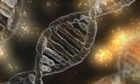 CRISPR驅動的基因激活技術可預防肌營養不良