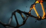 复旦大学,上海交大合作发表GUT文章:发现与癌症密切相关的因子