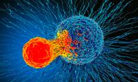 Science:老年人优先接种SARS-CoV-2疫苗更可能降低死亡率