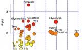 APT文献 | 系统性红斑狼疮病患的福音