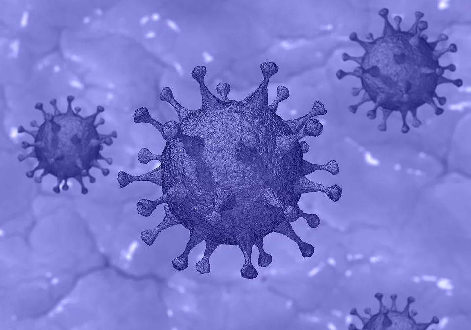 新冠病毒影响男性生育力?medRxiv论文建议男性患者进行睾丸病变随访和评估