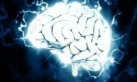 """Nature展示迄今为止最详细的""""人脑零部件清单"""""""