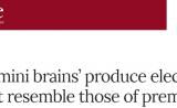 """引发伦理担忧的研究!Nature关注:""""迷你大脑""""发出类似早产儿的脑电波"""