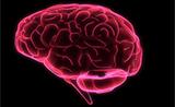 "Royal Society Open Science:聪明的大脑是""嗜血""的大脑"