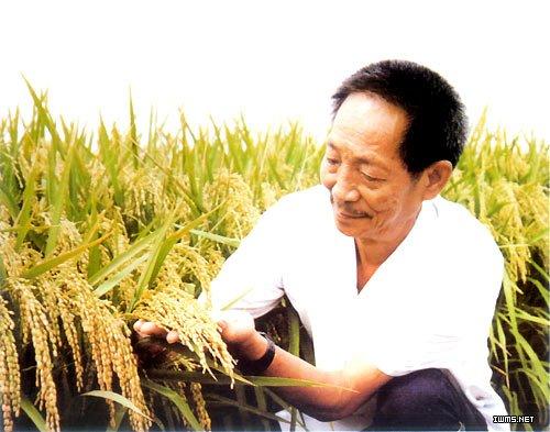 袁隆平拟引入分子生物技术植入超级杂交稻育种