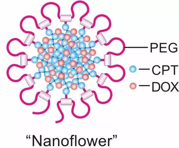 呈现花朵状的纳米雏菊
