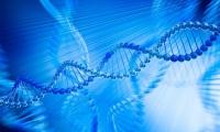 准确率100%!Nature医学:科学家们研发出无创产前筛查新方法