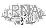 改变命运 改变世界!RNA药物将迎来爆炸式发展