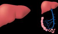 FDA批准索马鲁肽降低心血管风险新适应症,Rybelsus标签更新