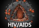 认识艾滋病毒与艾滋病