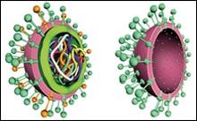 又一家外国公司抢先研发出H7N9疫苗