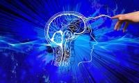 """首张人类小脑图谱揭示:小脑真的不""""小"""",而且还很强大"""