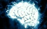 记忆存储并不需要突触强化! 诺奖得主PNAS发表颠覆性发现