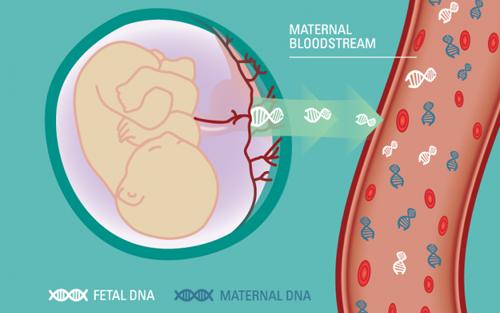 【科普】无创产前基因检测到底能检测什么?