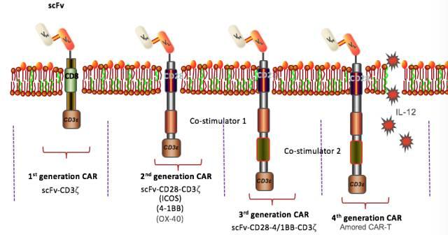 eshhar将免疫球蛋白scfv与fcεri受体(γ链)或cd3