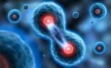 """颠覆认知!Science:新论文改写""""细胞分裂""""基因表达理论"""