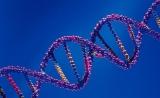 乔杰院士团队发表人体外成熟卵母细胞单细胞测序最新成果