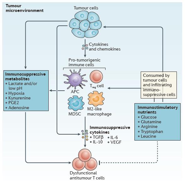 看这篇T细胞综述,做更好的免疫疗法!
