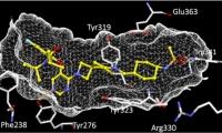 """白血病能在发病前被""""拦截""""?Science:小鼠模型证实可行"""