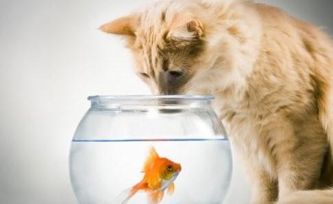 这得从猫科动物的眼睛说起