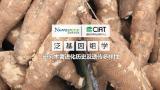 国际热带农业研究中心携手诺禾致源共建木薯泛基因组
