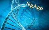 """最新成果!NgAgo可抑制乙肝病毒复制,但不是通过""""基因编辑"""""""