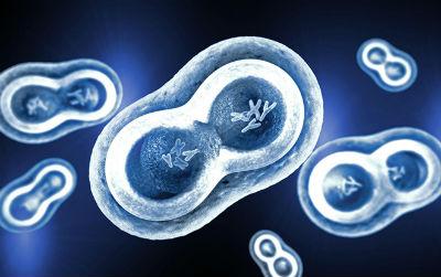 Science:让所有类型癌细胞都减缓生长的方法