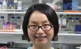 生命科学家陈玲玲:倾力探索未知,揭示谜底