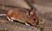 "Nature子刊: 基因编辑工具预防""贝多芬""小鼠听力受损"