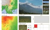 昆明植物所揭示多维生物多样性对森林生态系统功能的影响机制