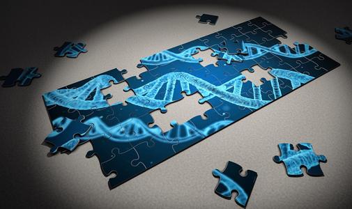 刘光慧等通过改写长寿密码子获得优质人类血管细胞
