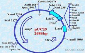 蛋白胶点(条)鉴定