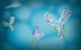 中国抗体药创新力量正崛起