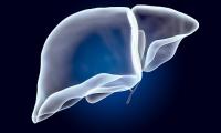 肝脏具有免疫功能?Nature:肝内免疫细胞分布影响机体免疫状态