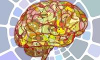 中国脑科学研究要扬长补短:临床资源丰富,研究平台不足