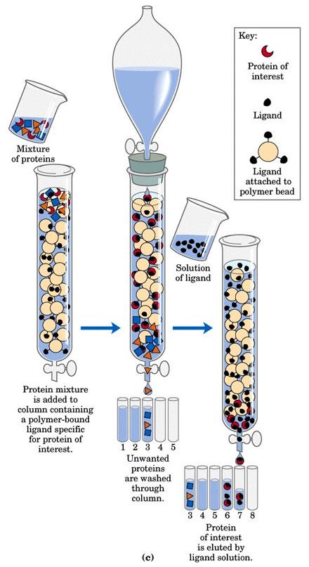 与其融合表达的蛋白不易形成包涵体